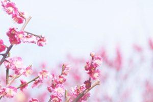 大田区でおすすめ!鳥を診察してくれる動物病院