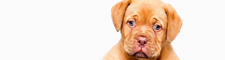 板橋区で大型犬歓迎のトリミングサロン
