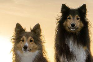 八王子市のトリミングサロン!大型犬OK【4選】