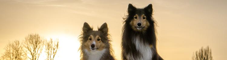 八王子市のトリミングサロン!大型犬OK【3選】