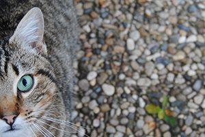 豊島区で予防接種が受けられる動物病院