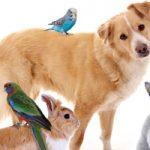 国分寺市で動物病院を探すならここ!