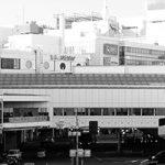 町田市で予防接種が受けられる評判の動物病院2選