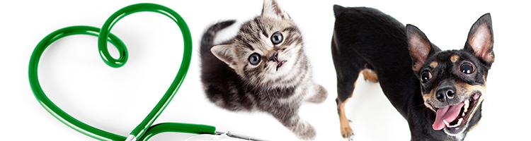 【2018年度版】埼玉県で年末年始に診療している動物病院8選