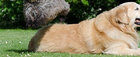 名古屋市で大型犬歓迎のおすすめトリミングサロン