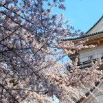 川崎市にあるクーポンが利用できるトリミングサロン特集