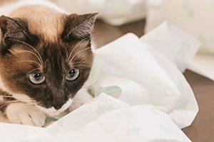 海老名市で予防接種が受けられる動物病院4選