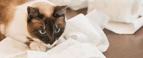 【2月22日は猫の日=^_^=】東京で【猫】に優しい動物病院9選!