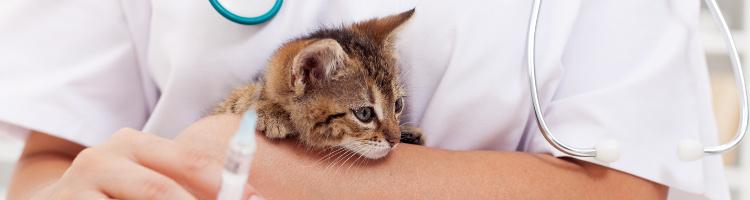 千葉市で予防接種!おすすめ動物病院【3選】