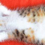 和歌山市で猫ちゃんにおすすめのトリミングサロン4選
