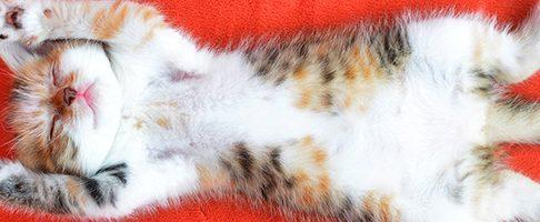 和歌山市で猫ちゃんにおすすめのトリミングサロン2選