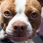 大型犬も大歓迎!渋谷区のおすすめトリミングサロン
