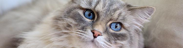 神戸市でトリミング!猫が得意なサロン【6選】