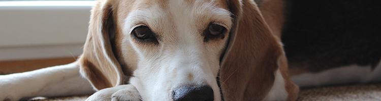 和歌山市で大型犬歓迎のおすすめトリミングサロン