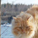 さいたま市でトリミング!猫OK・口コミで人気【4選】