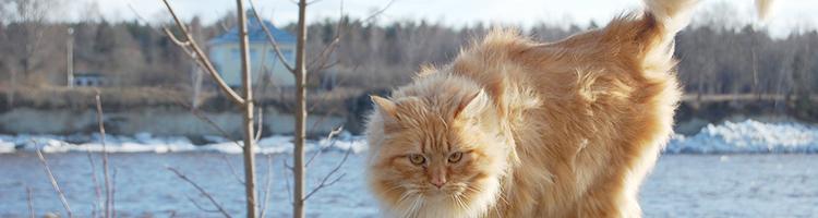 さいたま市でトリミング!猫OK・口コミで人気【5選】