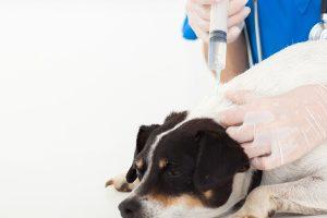 調布市で予防接種!おすすめ動物病院【2選】