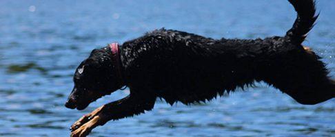 川口市で大型犬対応のトリミングサロン特集