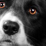 府中市で大型犬も歓迎しているトリミングサロン2選!ホテル付きもあり