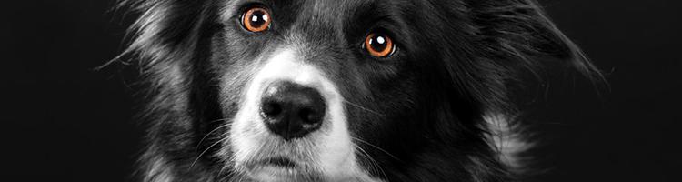 府中市で大型犬も歓迎しているトリミングサロン