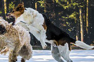 世田谷区で大型犬のトリミングが得意なペットサロン