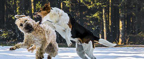 世田谷区で大型犬のトリミングが得意なペットサロン【4選】