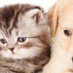 旭区(大阪市)トリミング!犬も猫もOKのサロン