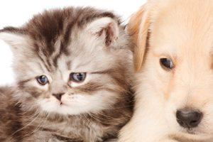横浜市で土曜日や日曜日も診療してくれる頼れる動物病院