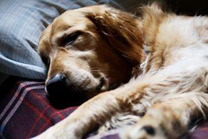 豊島区で大型犬も歓迎しているトリミングサロン