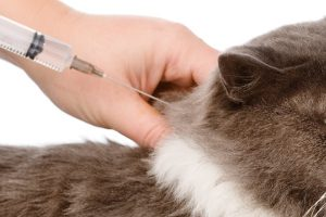 緑区(相模原市)で予防接種!人気の動物病院【3選】