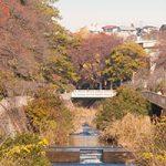 松戸市で歯磨きがメニューにあるトリミングサロンを紹介