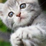 海老名市で猫OKのおすすめトリミングサロン特集