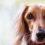 新宿区にある大型犬にも対応したトリミングサロン