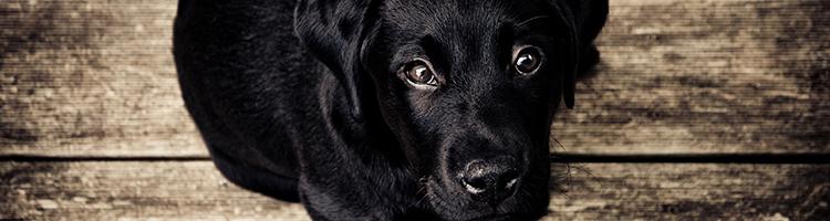 市川市にある大型犬対応可能なトリミングサロンについて
