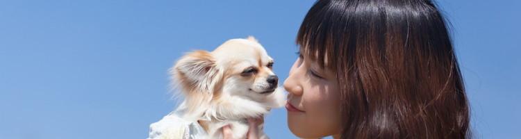 横浜市でおすすめの送迎付き動物病院3選!