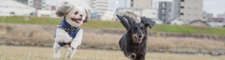 福岡市西区でトリミングするなら【2選】