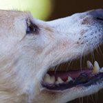 葛飾区で大型犬のトリミングを行う人気ペットサロン