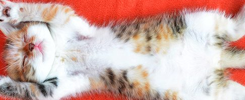 千葉市でトリミング!猫OKのサロン【6選】