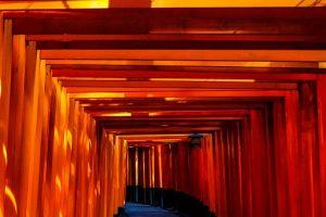 京都市でペットホテル併設の人気トリミングサロン特集