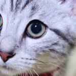 【さいたま市】避妊・去勢手術ができる動物病院!10選
