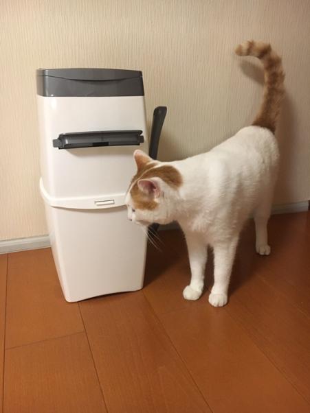 [ネコの飼い主さん必見!] 我が家のトイレまわり快適グッズのご紹介