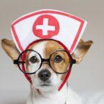 千葉県で夜間診療を行っている動物病院4選