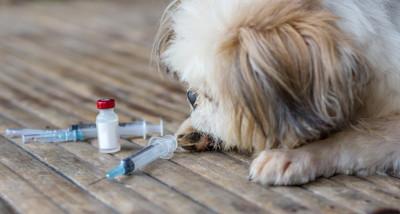 【獣医師監修】フィラリア症の予防は毎年絶対に必要?予防の前に血液検査をするのはどうして?