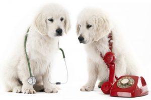 兵庫県でフィラリア予防!おすすめの動物病院【4選】