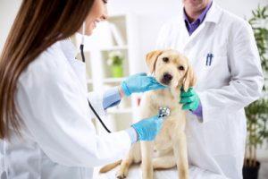 埼玉県でフィラリア予防薬の投与前に検査ができる動物病院特集