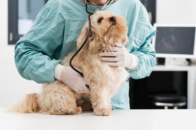 千葉県でフィラリア予防薬の投与前に検査ができる動物病院特集