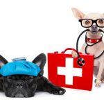 大阪府でフィラリア予防薬の投与前に検査ができる動物病院特集