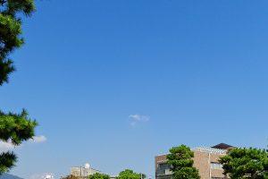 芦屋市でトリミングをするならココ!【4選】