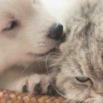 江戸川区で動物病院を探すなら!口コミ多数【5選】