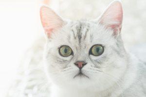 町田市で評判!犬・猫・うさぎの診察もできる動物病院